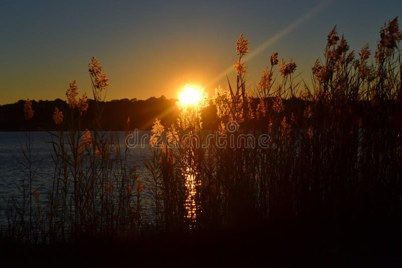 Zonsondergang op Bayou stock afbeeldingen