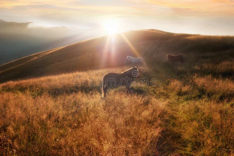 Zonsondergang op de achtergrond van de bergenaard Paardensilhouet bij nevel stock afbeelding
