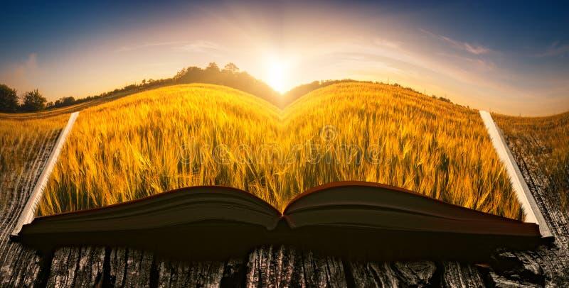 Zonsondergang op een gebied op de pagina's van een open boek stock afbeeldingen