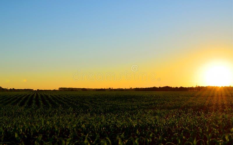Zonsondergang op een gebied van bieten stock afbeelding