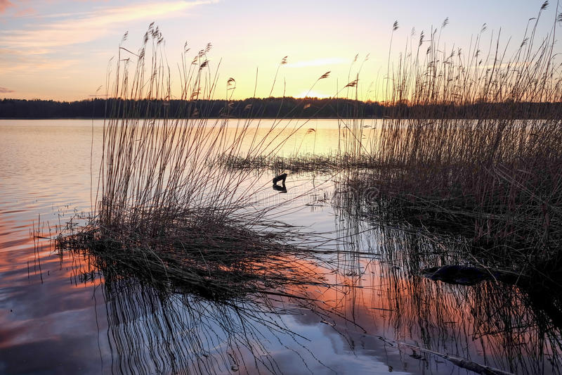 Zonsondergang op een meer Oude rietbezinning in water royalty-vrije stock foto's