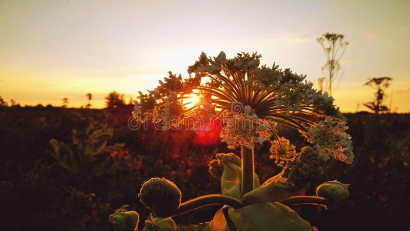 Zonsondergang op het gebied stock foto