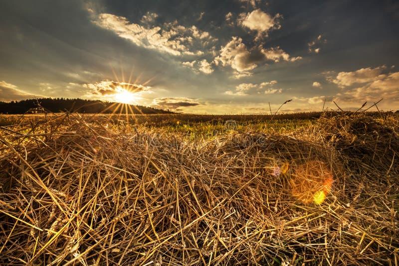 Zonsondergang op het gebied stock afbeelding