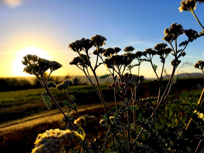 Zonsondergang op het terras royalty-vrije stock foto's