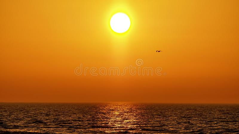 Zonsondergang oranje hemel en vogels die over overzees waarnemen stock foto's