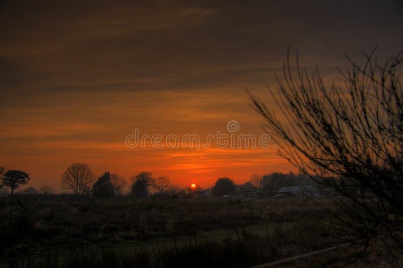 Zonsondergang over bomen stock foto