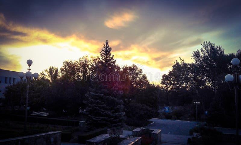 Zonsondergang over bos stock foto's