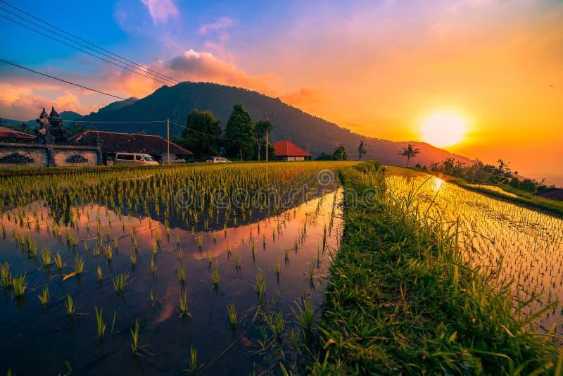 Zonsondergang over de padievelden in het water worden weerspiegeld dat royalty-vrije stock afbeelding