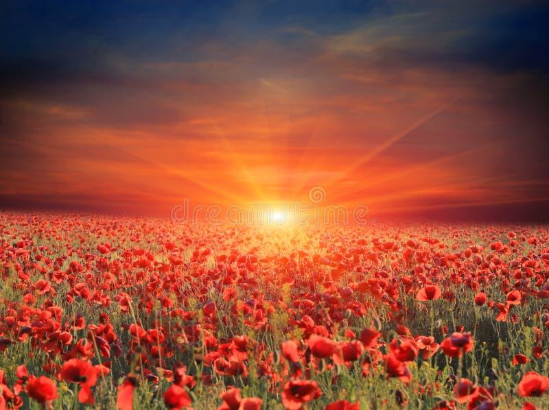 Zonsondergang over de weide van de papaverbloem royalty-vrije stock foto's