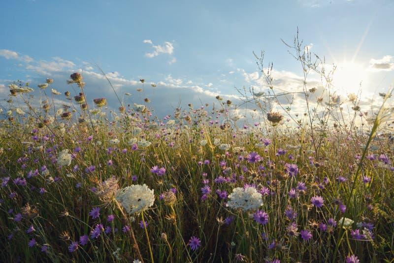 Zonsondergang over de zomerweide royalty-vrije stock foto's
