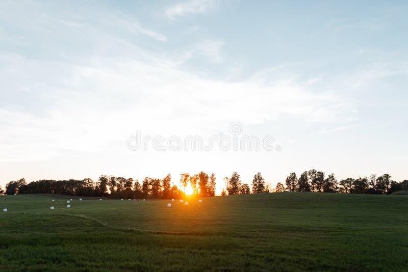 Zonsondergang over een gebied onder bomen op de horizon Heldere blauwe hemel en groen gras Landschapsplatteland bij zonsondergang stock afbeelding