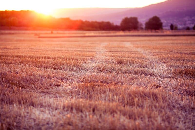 Zonsondergang over een tarwegebied - oogsttijd stock foto