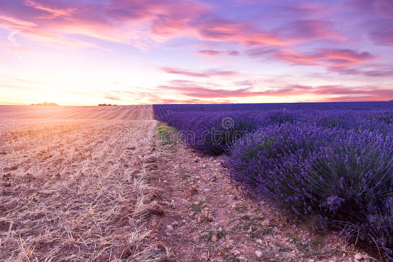 Zonsondergang over een violet lavendelgebied in de Provence royalty-vrije stock afbeeldingen
