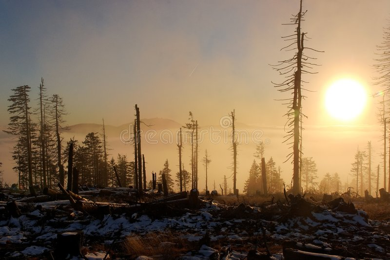 Zonsondergang over gevallen bos stock afbeeldingen