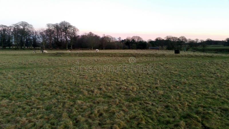 Zonsondergang over het Tatton-Park met kudde van herten op achtergrond - Tatton-het Park tuiniert royalty-vrije stock fotografie