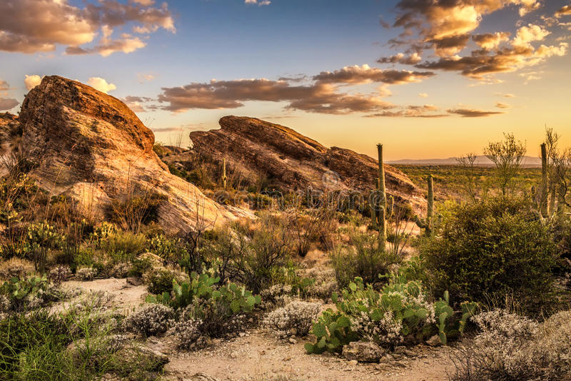 Zonsondergang over Javelina-Rotsen in het Nationale Park van Saguaro stock foto