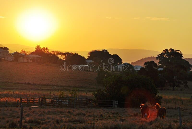 Zonsondergang over kleine provincieplaats & paarden in paddock stock fotografie