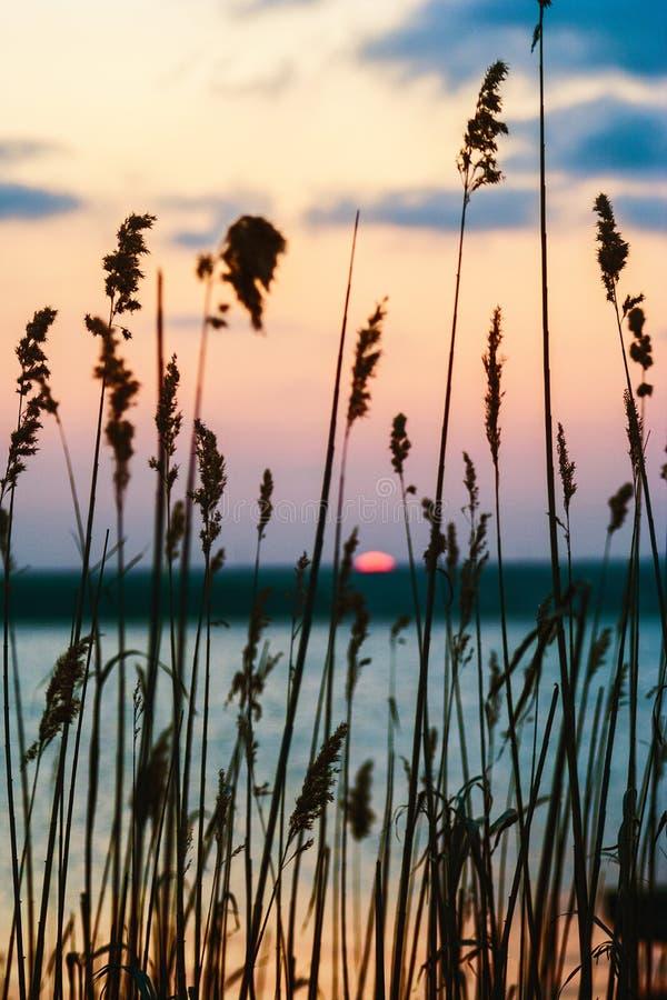 Zonsondergang over meer door het gras wordt gezien dat stock foto