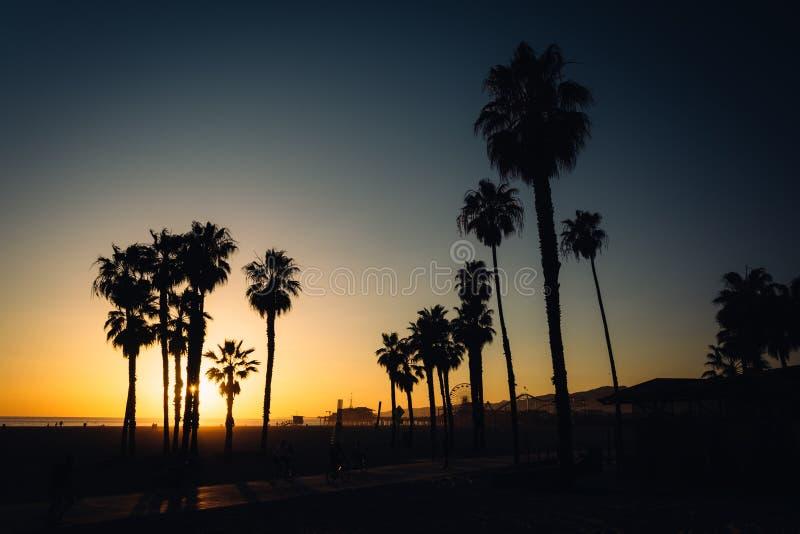 Zonsondergang over palmen in Santa Monica royalty-vrije stock fotografie