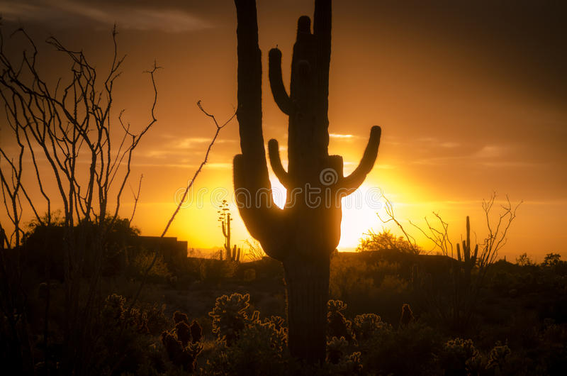 Zonsondergang over Phoenix, Az met cactusboom royalty-vrije stock foto
