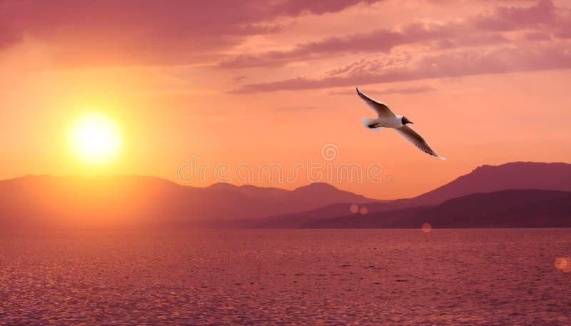 Zonsondergang, overzees en berg stock foto