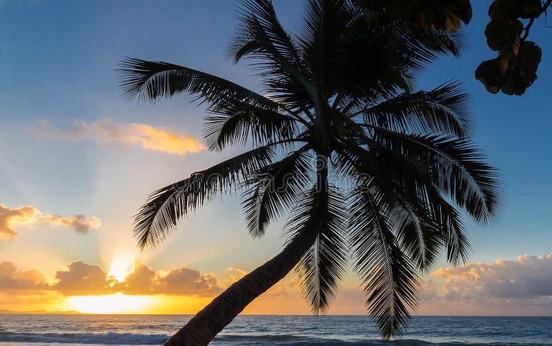 Zonsondergang, paradijsstrand en palm, het eiland van Martinique stock foto
