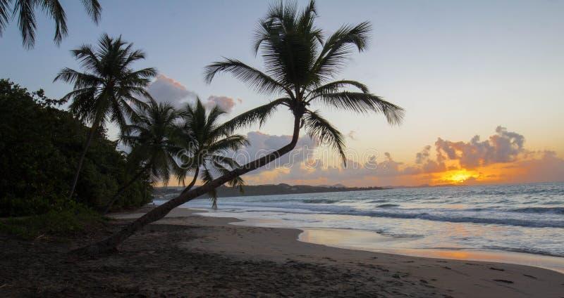 Zonsondergang, paradijsstrand en palm, het eiland van Martinique royalty-vrije stock afbeelding