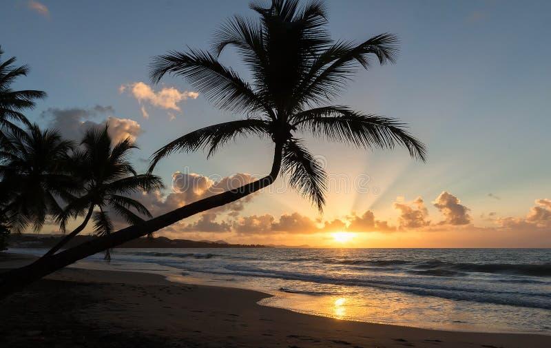 Zonsondergang, paradijsstrand en palmen, het eiland van Martinique stock foto