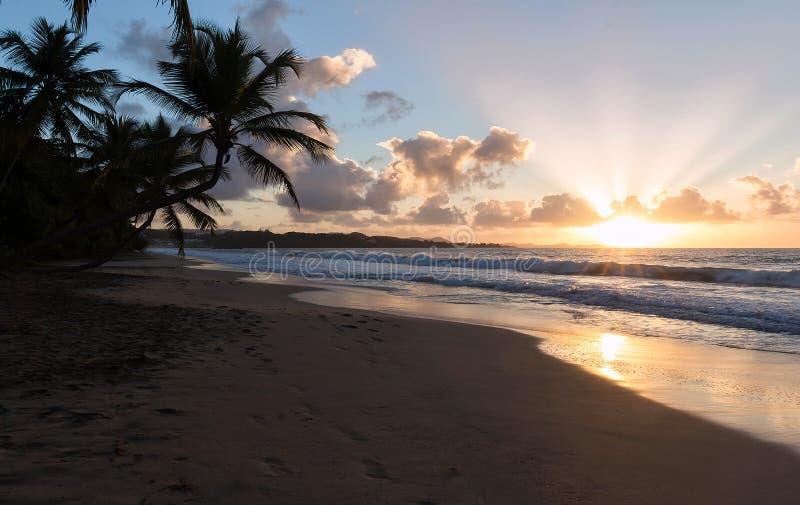 Zonsondergang, paradijsstrand en palmen, het eiland van Martinique royalty-vrije stock afbeeldingen