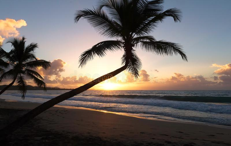 Zonsondergang, paradijsstrand en palmen, het eiland van Martinique stock foto's