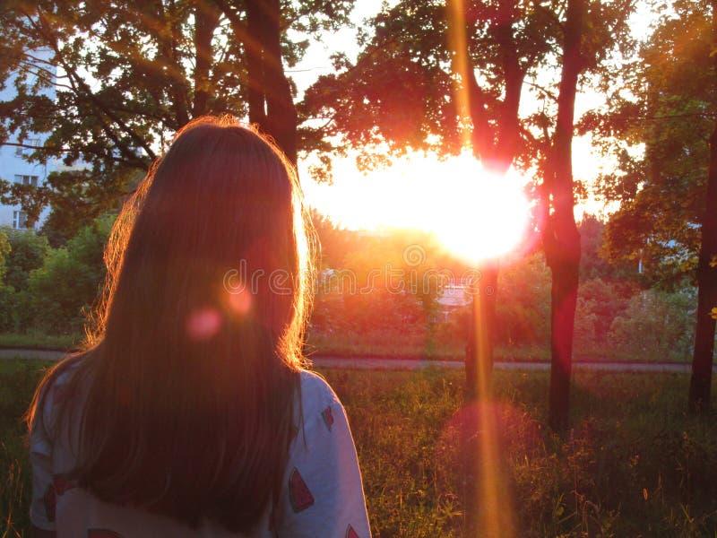 Zonsondergang in park stock fotografie