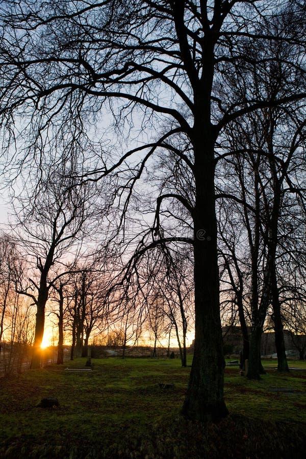 Zonsondergang in Park stock afbeeldingen