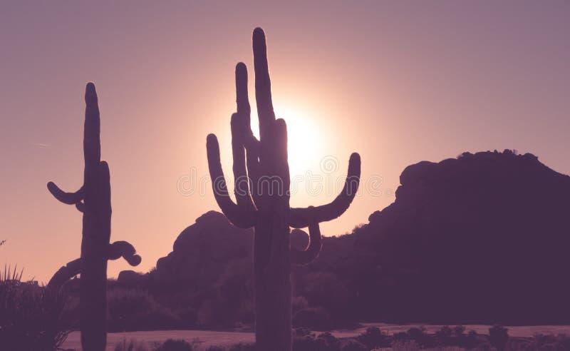 Zonsondergang in Scottsdale Arizona, Saguaro-cactusbomen royalty-vrije stock afbeelding