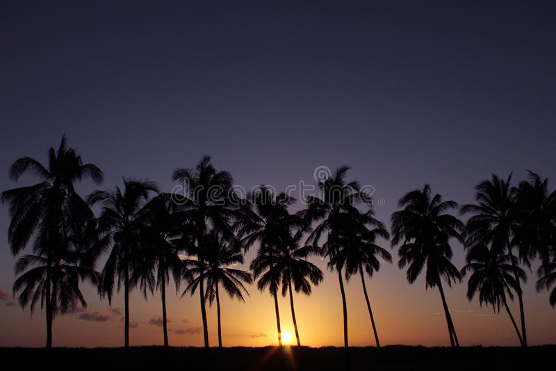 Zonsondergang tegen Palmen in Costa Rica stock afbeelding