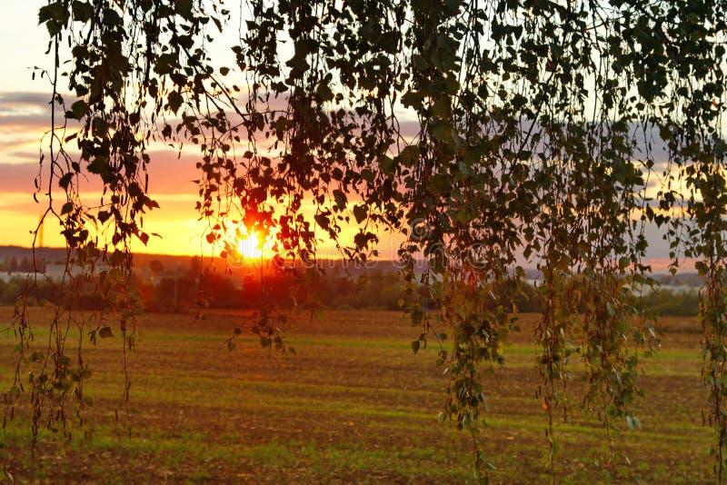Zonsondergang tussen de boombladeren stock afbeelding