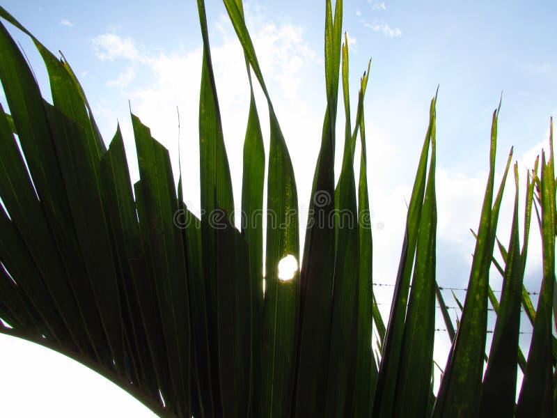 Zonsondergang tussen het gras stock afbeeldingen