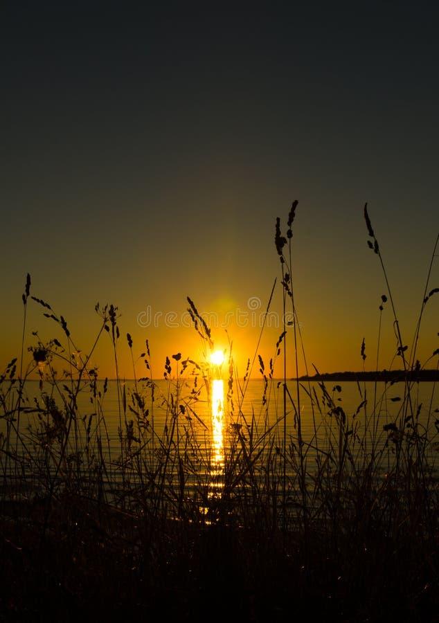 Zonsondergang van achter gras royalty-vrije stock foto's