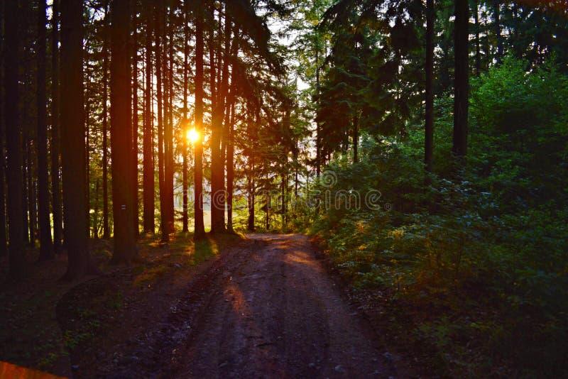 Zonsondergang van het midden van het bos stock afbeelding