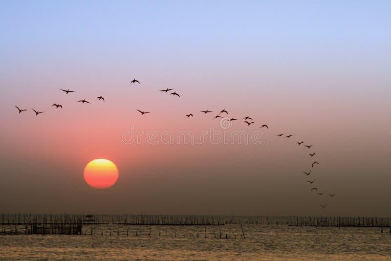 Zonsondergang, vogels het vliegen royalty-vrije stock fotografie