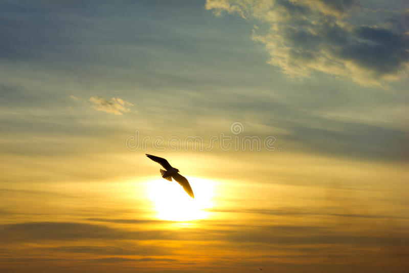 Zonsondergang. Vogelsilhouet en zon royalty-vrije stock afbeeldingen