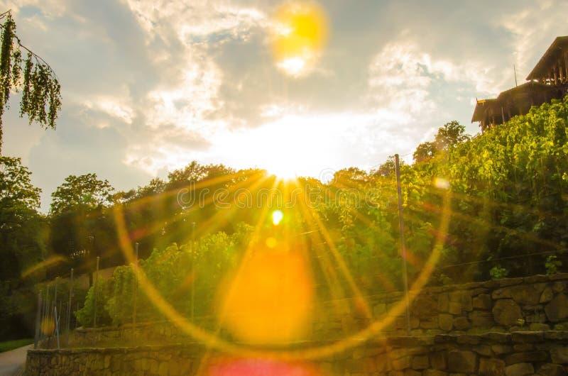 Zonsondergang in wijnmakerij royalty-vrije stock afbeelding