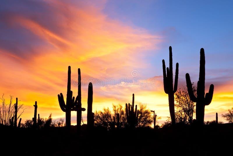 Zonsondergang in woestijn. stock foto