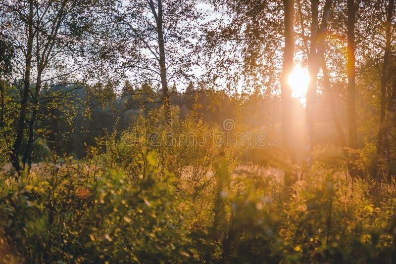 Zonsondergang of Zonsopgang in Forest Landscape Zonzonneschijn met Natuurlijk royalty-vrije stock fotografie