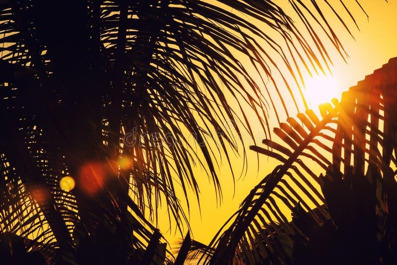 Zonsondergang of zonsopgang met palmen en schip in de Maldiven, exotische bestemmingen voor vakantie of wittebroodsweken, stock afbeelding