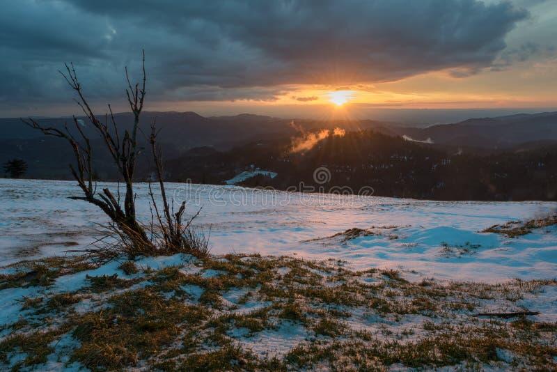Zonsondergang Zwart Bos stock fotografie