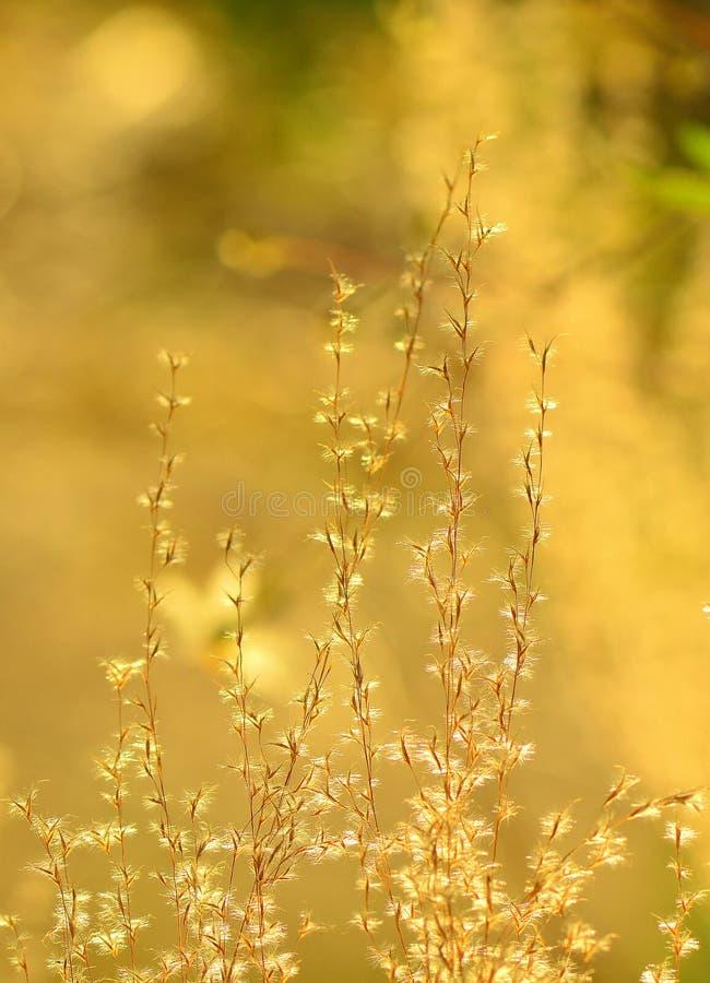 Zonsondergangbloemen royalty-vrije stock foto's