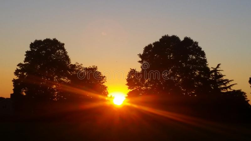 Zonsondergangbomen royalty-vrije stock fotografie