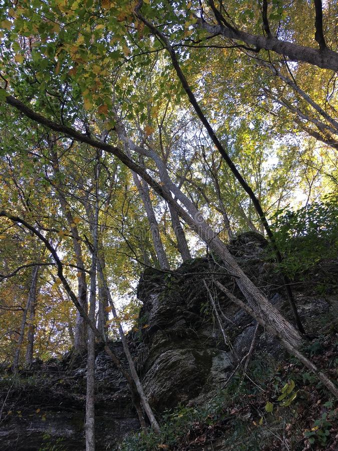 Zonsondergangbomen stock foto's
