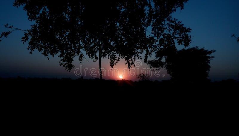 Zonsondergangboom stock fotografie