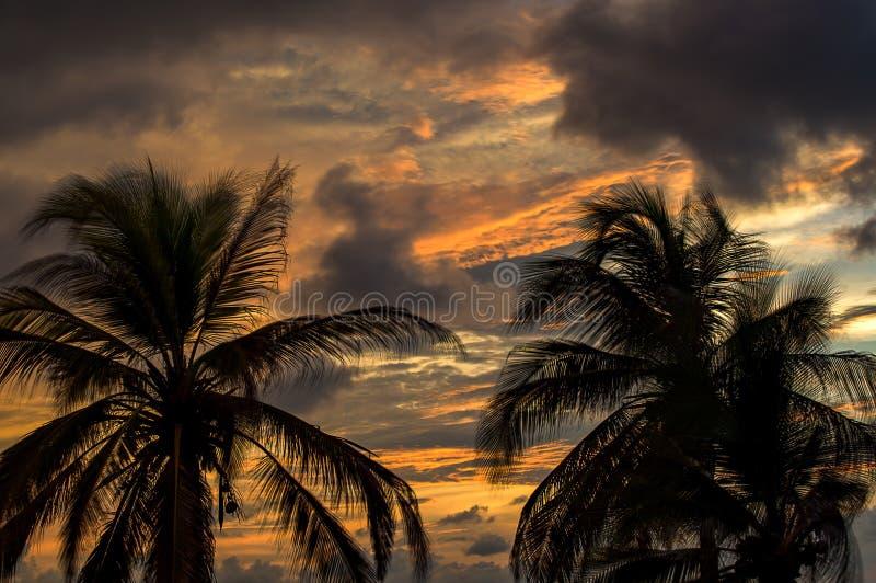 Zonsonderganghemel achter palmen stock afbeelding